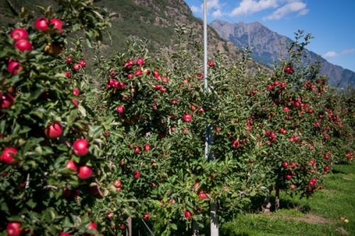 Le mele italiane guadagnano l'accesso al mercato tailandese