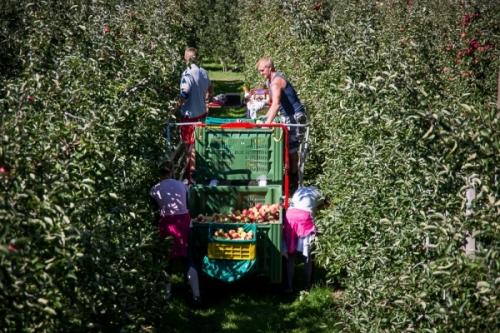 La situazione di mercato per le mele italiane al 1° Maggio