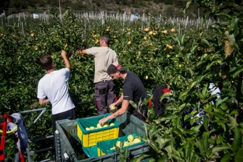 Lavoro stagionale nel settore delle mele: progressi, ma c'è ancora da fare