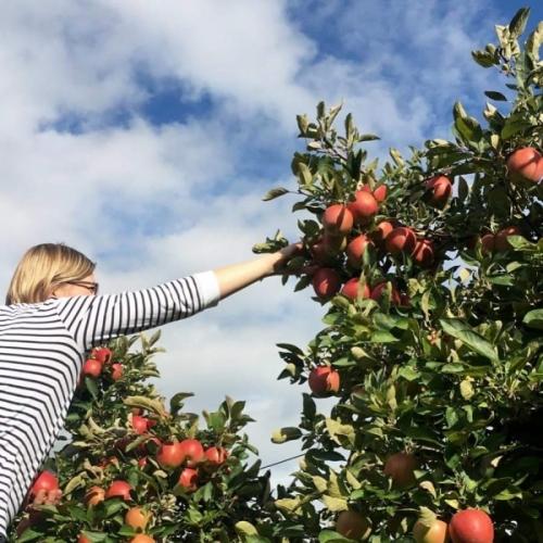Taiwan aperta ufficialmente alle mele italiane