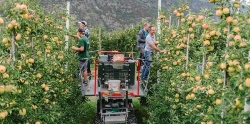 Non si ferma l'export delle mele verso l'India - trovata una soluzione per l'emissione del certificato NO-OGM