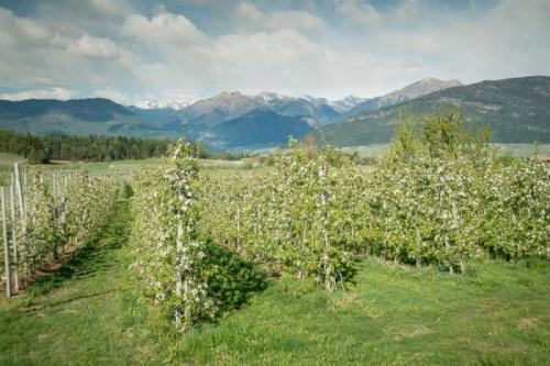 La situazione di mercato in Italia aggiornata a Maggio e l'incontro con la Commissione Europea sul biologico
