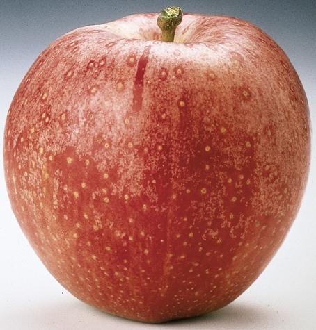 Costi di logistica ed imballaggi rischiano di compromettere la campagna commerciale delle mele Italiane