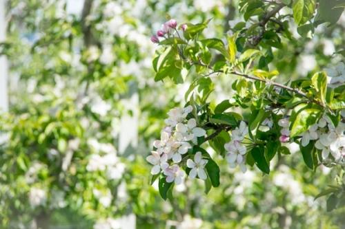 Trentino frutticolo sostenibile, ecco il programma 2018
