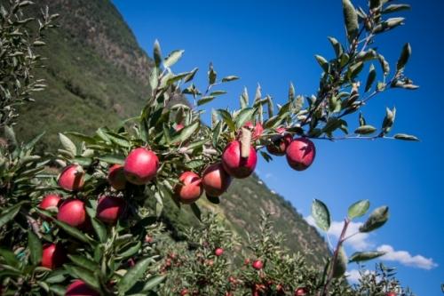 Produzione di mele e situazione di mercato per la stagione 2018/2019