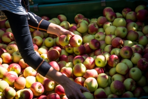 World Apple and Pear Association (WAPA) presents annual Southern Hemisphere production forecast
